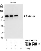 NB100-97838 - Optineurin / HIP7