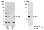 NB100-97847 - DNAJC8
