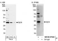 NB100-97848 - DNAJC9