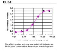 24350002 - 14-3-3 protein sigma / SFN