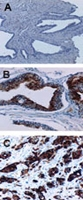 PAB0252 - IAP2 / BIRC2