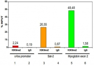 PAB0653 - Histone H3.3