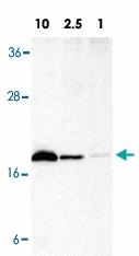 PAB12822 - CD253 / TRAIL