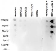 PAB14096 - Histone H3