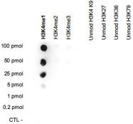 PAB14112 - Histone H3