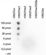 PAB14115 - Histone H3