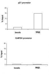 PAB14128 - TP53 / p53