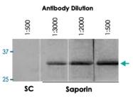 PAB14312 - Saporin