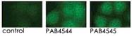 PAB4544 - PRKD3