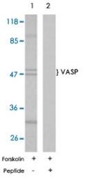 PAB5625 - VASP