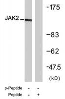 PAB7655 - Tyrosine-protein kinase JAK2