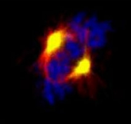 PAB8466 - Aurora kinase A
