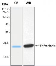 PRO-50058-0100 - Tumor necrosis factor (TNF-alpha)
