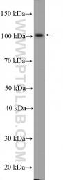 14269-1-AP - ABCG4