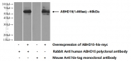 22526-1-AP - ABHD15