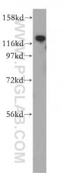 14139-1-AP - ADAM12 / MLTN