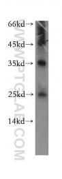 13621-1-AP - DEADC1