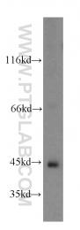 19359-1-AP - ADHFE1 / HMFT2263