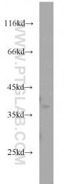 10323-1-AP - APEX1 / REF-1