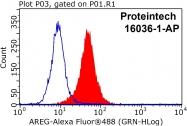 16036-1-AP - Amphiregulin