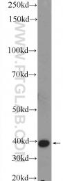 16351-1-AP - BHMT2
