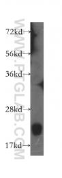10988-1-AP - BID