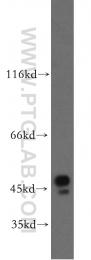 19917-1-AP - BZW1