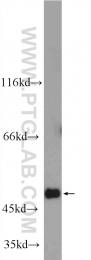 25124-1-AP - C6orf211