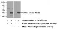 12953-1-AP - CA10
