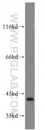 19535-1-AP - CAPG