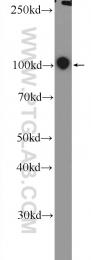 25818-1-AP - CBL / RNF55