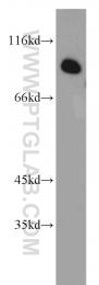 13861-1-AP - CCPG1