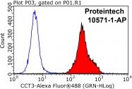 10571-1-AP - CCT3 / TCP1 gamma