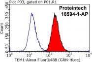 18594-1-AP - CD248 / TEM1