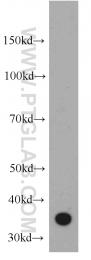 55118-1-AP - CD336