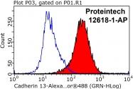 12618-1-AP - Cadherin-13