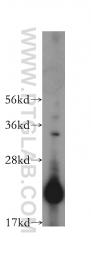 16304-1-AP - CHAC2