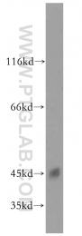 15346-1-AP - CKMT