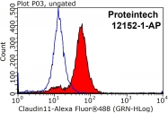 12152-1-AP - Claudin-11 / CLDN11