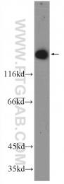 18094-1-AP - CLOCK