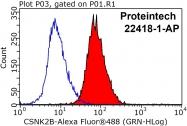 22418-1-AP - Casein kinase II beta