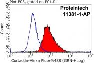 11381-1-AP - Cortactin
