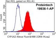 19936-1-AP - CYP1A2