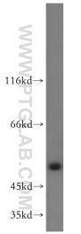 14370-1-AP - DDX25