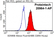 20964-1-AP - Endothelin B receptor