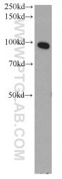 10071-1-AP - ELAC2 / HPC2