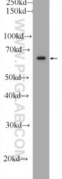 11503-1-AP - FRS2
