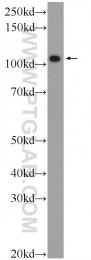 25609-1-AP - FSD2