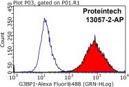 13057-2-AP - G3BP1 / G3BP