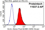 11037-2-AP - Glutamine synthetase